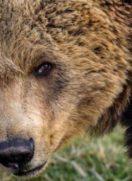 Tomić nakon susreta s medvjedom: Skočio je i oborio me